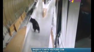 Медведь протестировал санно-бобслейную трассу Сочи