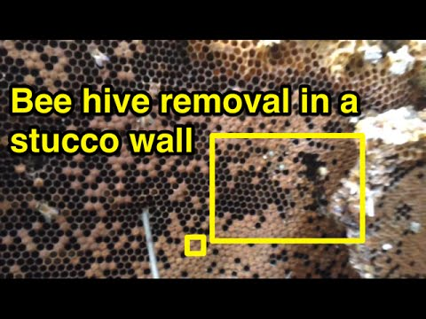 Phoenix bee removal | Bee hive in stucco wall.