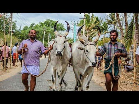 Rackla Race vandi no 7 Prabu and Kumar Archinarupalayam 2nd prize