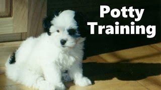 How To Potty Train A Daisy Dog Puppy - Daisy Dog House Training - Housebreaking Daisy Dog Puppies