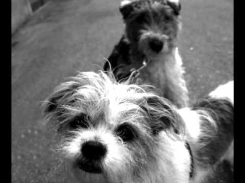 Los perros ven en blanco y negro youtube for Laminas blanco y negro