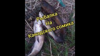 Как поймать сома Ловля Канадского сомика Ловля сома Беларусь Забродье Деревное Сом Беларусь