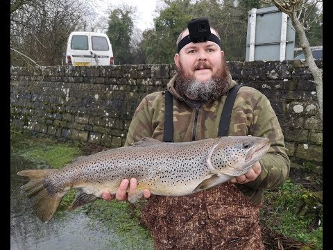 Lough Erne Brown Trout On Pike Bait, Vlog No 11
