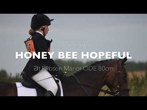 Rabson Manor ODE 80cm 08/08/2016 [Honey Bee Hopeful] 2nd Place