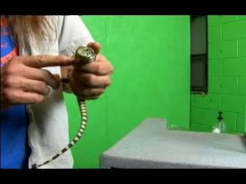 Types of Lizards | Reptile Zoo | Reptile Gardens | Reptile ...