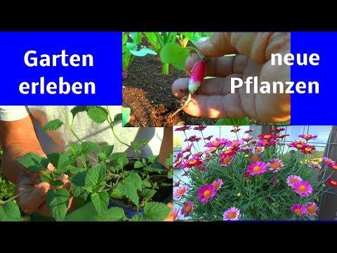 Der kleine Garten und seine Vielfalt entdecken Topf und Kübelpflanzen Kräuter Gemüse Blumen Hochbeet