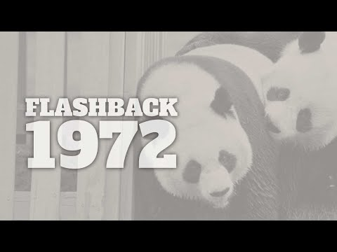 Flashback to 1972 - A Timeline of Life in America  