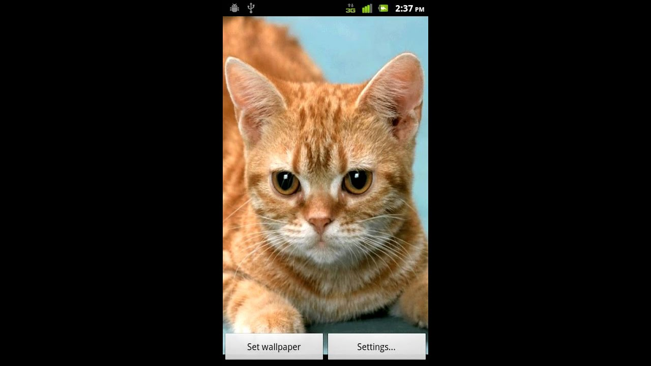 Animated Kitty Live Wallpaper 1 Android Market