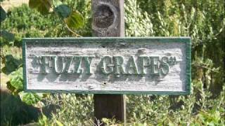 circle of shit fuzzy grapes