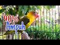 Pancingan Lovebird  Ampuh Mengatasi Lovebird Malas Bunyi  Mp3 - Mp4 Download