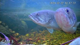 MY PET BASS ARE SPAWNING!!