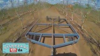 Ceviz Tarımı Endüstrisinde çığır açan Avustralya.