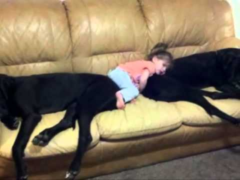 Why Kids should have Pets