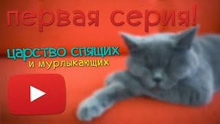 "Кот спит и кошка спит ""Спящие котята"""