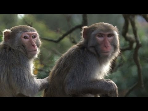 Hong Kong kicks off Year of Monkey, but primate relations sour