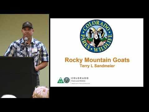 Colorado Hunting Tips: 'Mountain Goat Hunting 101'