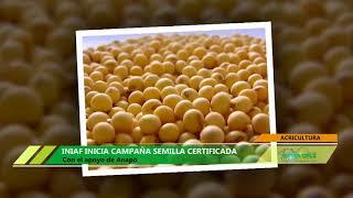 Скачать INIAF INICIA CAMPAÑA SEMILLA CERTIFICADA