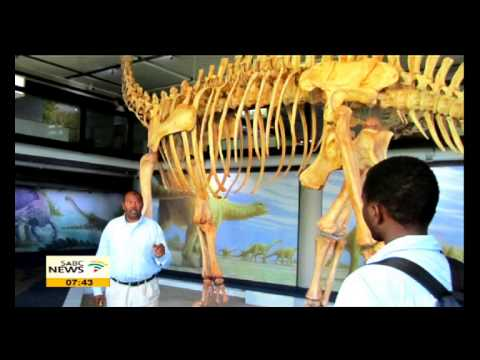 Iziko Museums of SA to exhibit one of the countries greatest palaeo-finds