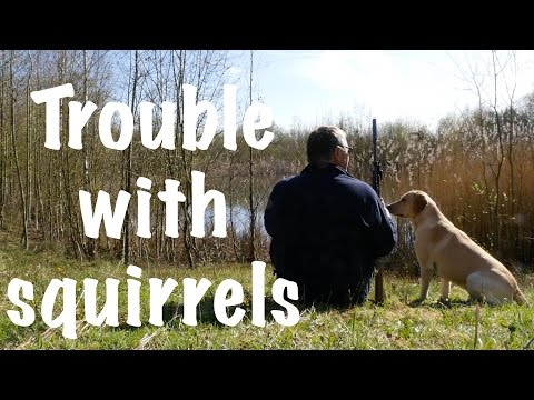 The trouble with squirrels. Woodland management. National Forest UK.
