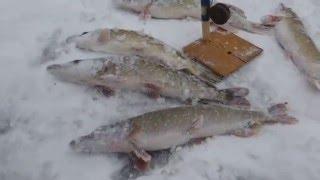 Первая Зимняя Рыбалка 29.11.2014 (сезон 2014-2015) ловим щук Белгородская область