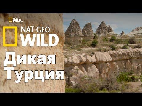 Nat Geo Wild: Дикая Турция / Turkey's Harsh Paradise - Как поздравить с Днем Рождения