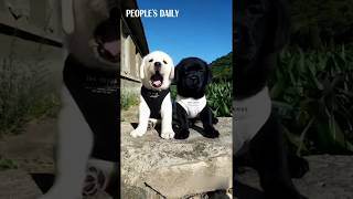 Is yawning really contagious? Adorable fluffy animals yawning compilation