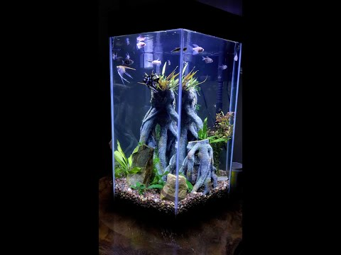 Freshwater TopFin 20 Gallon Hexagon Aquarium Aquascape
