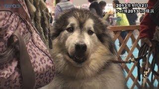 日本最大級のペットイベント「Pet博2013 in 横浜」が2013年1月12日、パ...