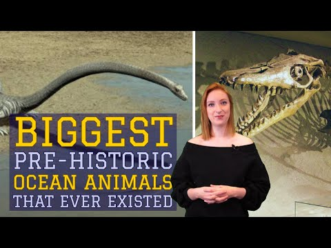 BIGGEST Pre-Historic Ocean Animals That Ever Existed