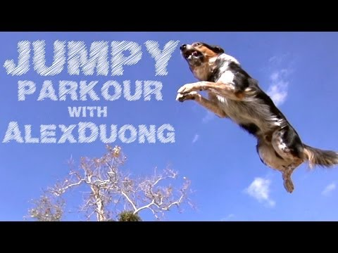 Alex & Jumpy - The Parkour Dog