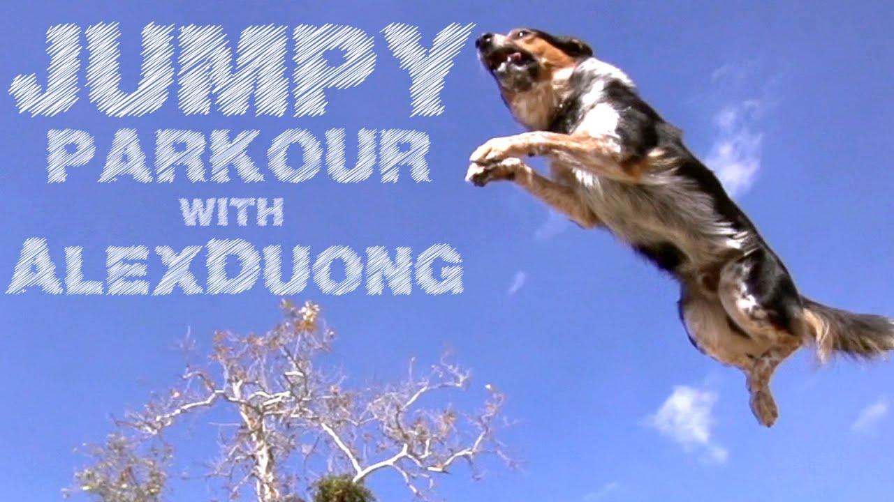 Jumpy - The Parkour Dog