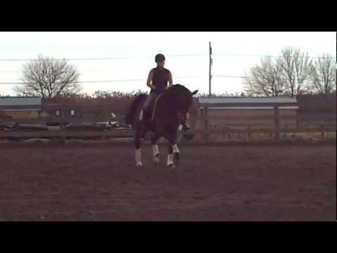 BeyMoon Zela FEI Grand Prix Dressage Arabian Stallion