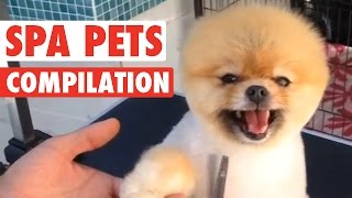 Crazy Spa Pets || Compilation