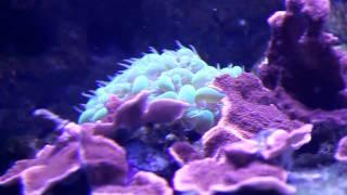 Coral Reef at Ocean Park