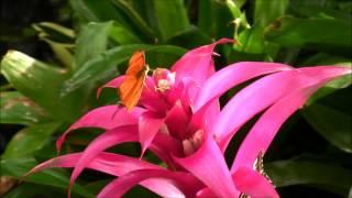 Красота Природы (Бабочки)(Видео СоТворено Единым Божественным Сердцем. МЫ ЕСМЬ ОДНО В ЛЮБВИ! МЫ ЕСМЬ ЛЮБОВЬ! Аллилуйя Любви! Аллилуйя..., 2015-02-27T20:14:01.000Z)