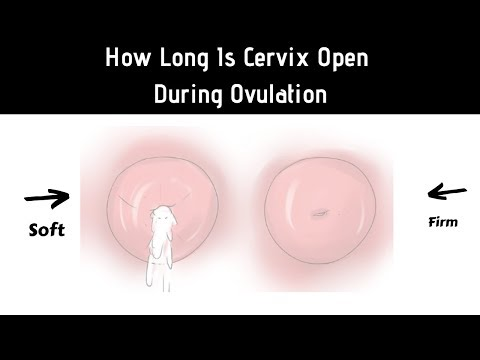How Long Is Your Cervix Open During Ovulation   Open Or Closed