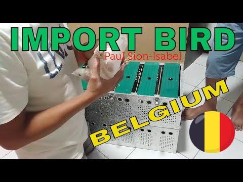 UNBOXING MY IMPORT BIRDS FROM BELGIUM