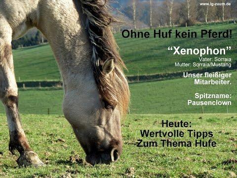 Ohne Huf kein Pferd! Hufpflege … mit Überraschung! (Untertiteltext beachten!)
