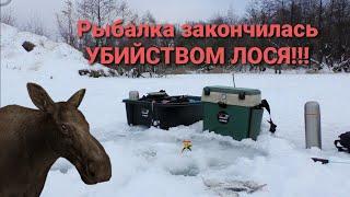 Рыбалка закончилась УБИЙСТВОМ ЛОСЯ Ловим на зимнии удочки Жерлицы на щуку
