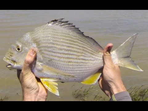 Fishing The Beautiful Estuaries Of The Eastern Cape Of South Africa