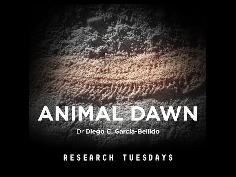 Animal Dawn - Research Tuesday - Presentation
