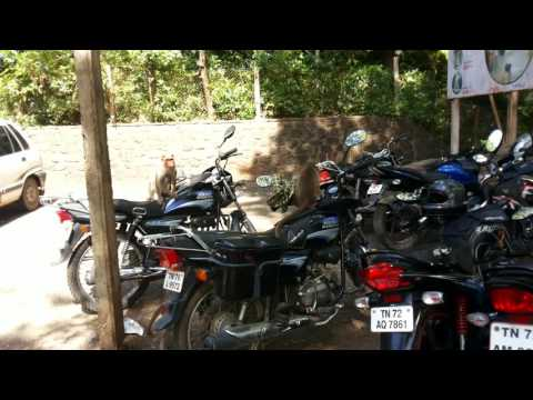 Monkey's funny moments in Courtalam | Tamilnadu