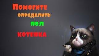 Помогите определить пол котёнка!!!
