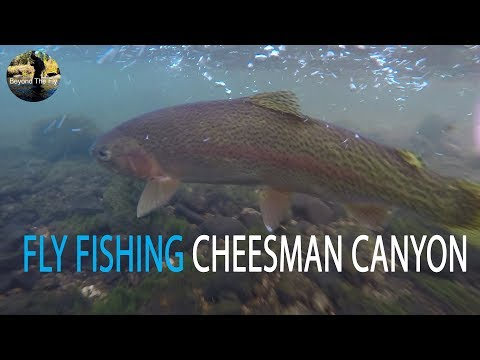 BEYOND THE FLY - Fly Fishing Lower Cheesman Canyon | Ep. 2