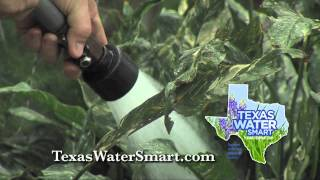 Water Smart Tip: Watering Container Plants