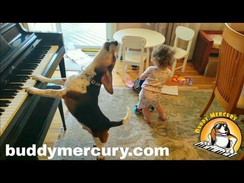 Sherri Marengo - A dancing baby and a piano playing hound dog? OH YEAH!!