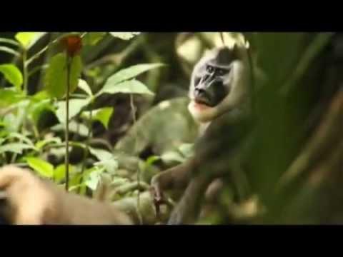 Equatorial Guinea Primate Conservation