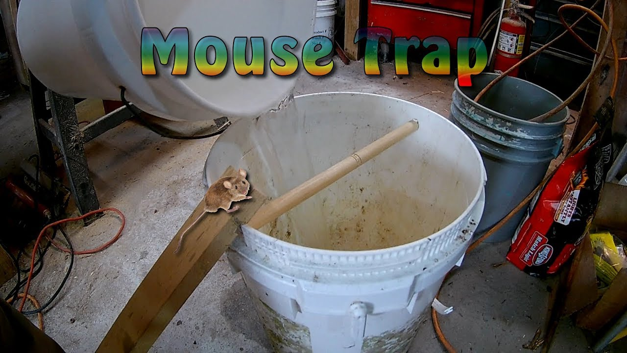 How To Make Bucket Rolling Log Mouse Trap Best Mouse