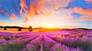 GOOD MORNING MUSIC ➤ 528Hz New Positive Healing Music - Clear All Negative Energy - Positive Vibe