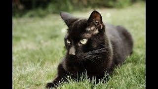 Дворовые коты метят территорию / Yard cats mark territory.